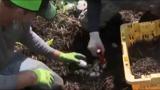 VIDEO: Gator egg hunt season is on!
