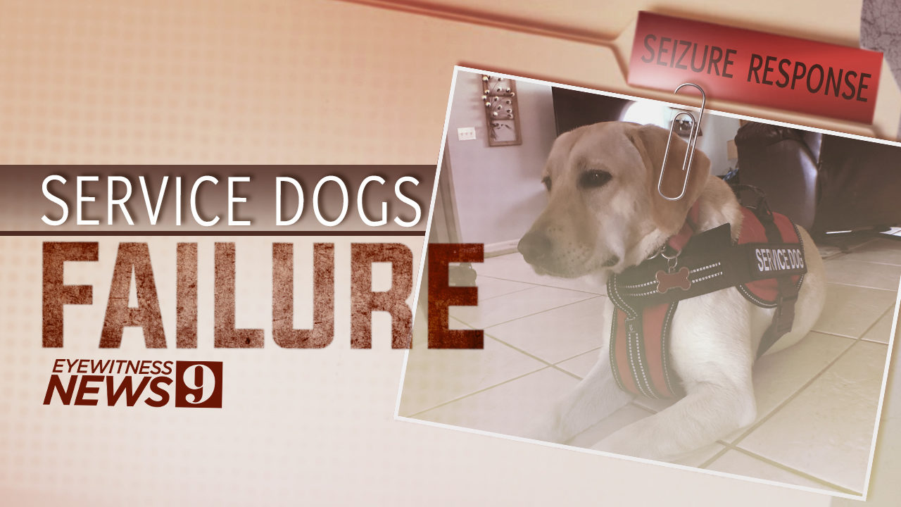 Families claim they paid for service dogs that can't keep them safe
