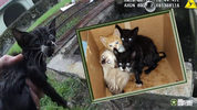 Four kittens have fur-ever homes after they were rescued from a storm drain Tuesday outside a Marion County elementary school.