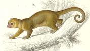 Sketch Photo: Wikimedia commons