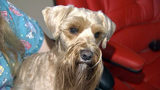 VIDEO: Deputies: Man steals rare $17K dog from Seminole County breeder, heads to Michigan