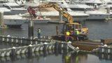 VIDEO: Wildlife officials working to rescue manatees stuck in Daytona Beach marina