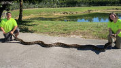 FWC said the Python Action Team captured an 18-foot-long female python Sept. 22 at Big Cypress National Preserve.