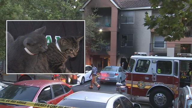 Woman hospitalized, 5 cats rescued after fire breaks out at Orange County apartment complex