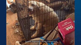 VIDEO: Children, 245 animals found in 'deplorable living conditions' at Edgewater home
