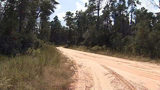 VIDEO: Hunter uncovers body in Ocala National Forest, says area 'smelled like death'