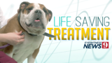 New treatment options could lengthen your pet's life